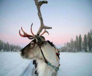 A Weihnachten rentiere ziehen schlitten puzzle