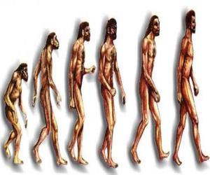Ablauf der evolution des menschen aus australopithecus Lucy zu modernen menschen weitergabe unter anderem von männern Heidelberg, Peking, Neandertaler und Cromagnon puzzle