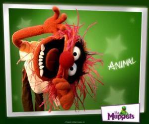 Animal, ist die verrückte Schlagzeuger der Band aus der Muppet Show ein primitiver Mensch puzzle