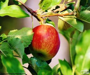 Apfel im Baum puzzle