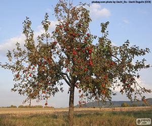 Apfelbäume puzzle
