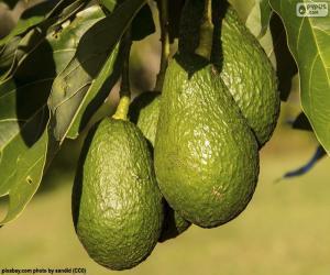 Avocados im Baum puzzle