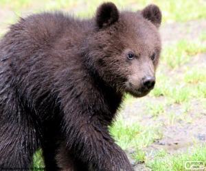 Bärenjunges, Baby-Bär puzzle
