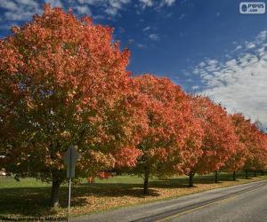 Bäume im Herbst puzzle