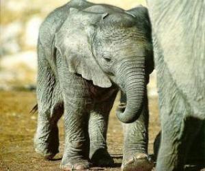 Baby Elefant mit seiner Mutter puzzle