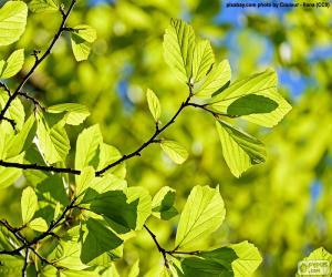 Baum-Blätter puzzle