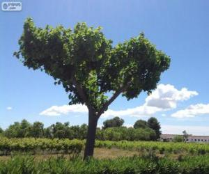 Baum im Felde puzzle