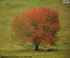 Baum im Herbst puzzle