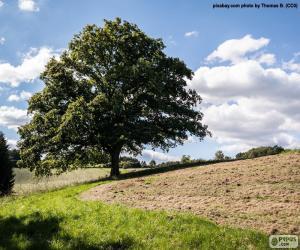 Baum in Gepflügtes Feld puzzle