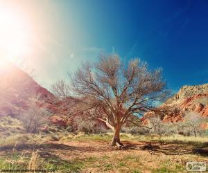 Baum ohne Blätter puzzle