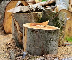 Baumes frisch geschnittenen puzzle