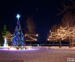 Beleuchtete Weihnachtsbäume puzzle