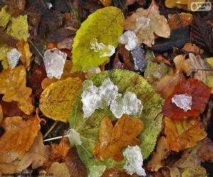 Blätter und Eis puzzle