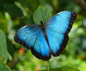 Blauer Schmetterling puzzle