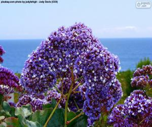 Blumen von Limonium perezii puzzle