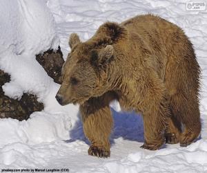 Braunbär auf dem Schnee puzzle