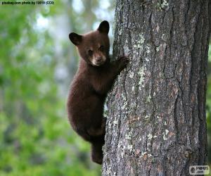 Brauner Bär klettert einen Baum puzzle