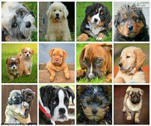 Collage von Hunden puzzle
