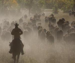 Cowboy führt eine Herde puzzle