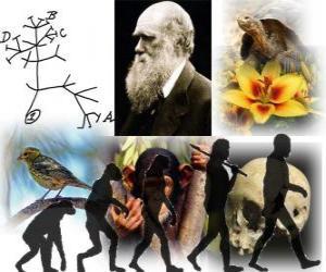 Darwin Tag, war Charles Darwin auf 12. Februar 1809 geboren. Darwin Baum, der erste Regelung seiner Evolutionstheorie puzzle