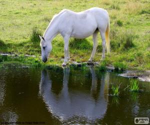 Das weiße Pferd trinken puzzle