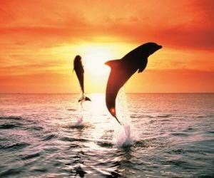 Delfine bei Sonnenuntergang puzzle