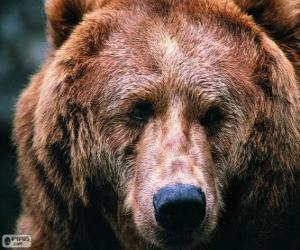 Der Kopf eines großen Bären puzzle