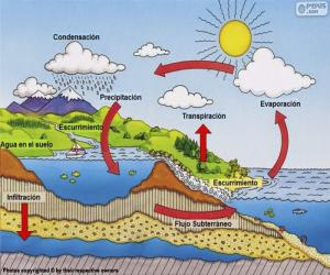 Der Wasserkreislauf (es) puzzle