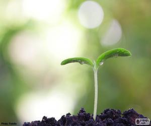Die Geburt einer Pflanze puzzle