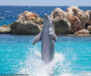Dolphin tun ein Trick puzzle