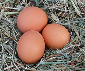 Drei Eiern puzzle