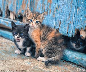 Drei Kätzchen puzzle