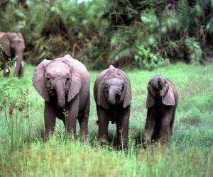 drei kleinen Elefanten puzzle