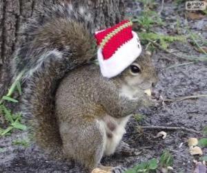 Eichhörnchen Sie mit dem Hut von Santa Claus puzzle