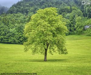 Ein Baum auf der Wiese puzzle