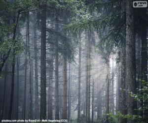 Ein dichter Wald puzzle