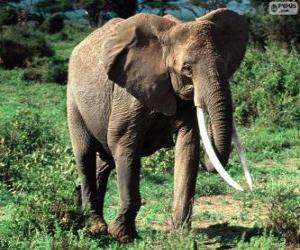 Ein Elefant mit Stoßzähne puzzle