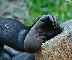 Ein Gorilla-Fuß puzzle