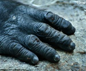 Ein Gorilla-hand puzzle