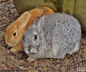 Ein paar Kaninchen puzzle