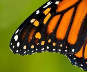 Ein Schmetterlingsflügel puzzle