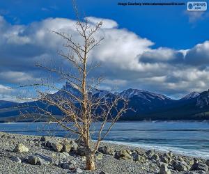 Ein toter Baum nahe dem See puzzle