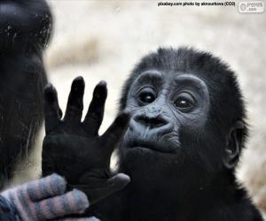 Eine neugierige Affe puzzle