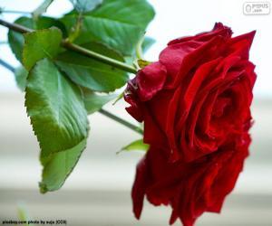 Eine schöne rose puzzle