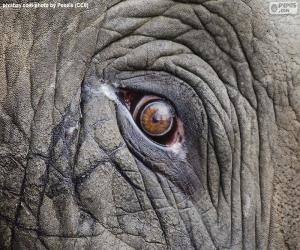 Elefant-Auge puzzle