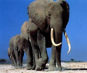 Elefanten gehen puzzle