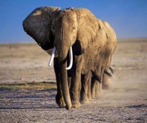 Elefanten Wandern in Zeile puzzle