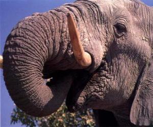 Elephant Essen puzzle