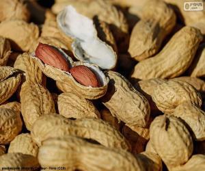 Erdnüsse In Schale puzzle