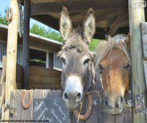 Eselköpfe und Pony puzzle